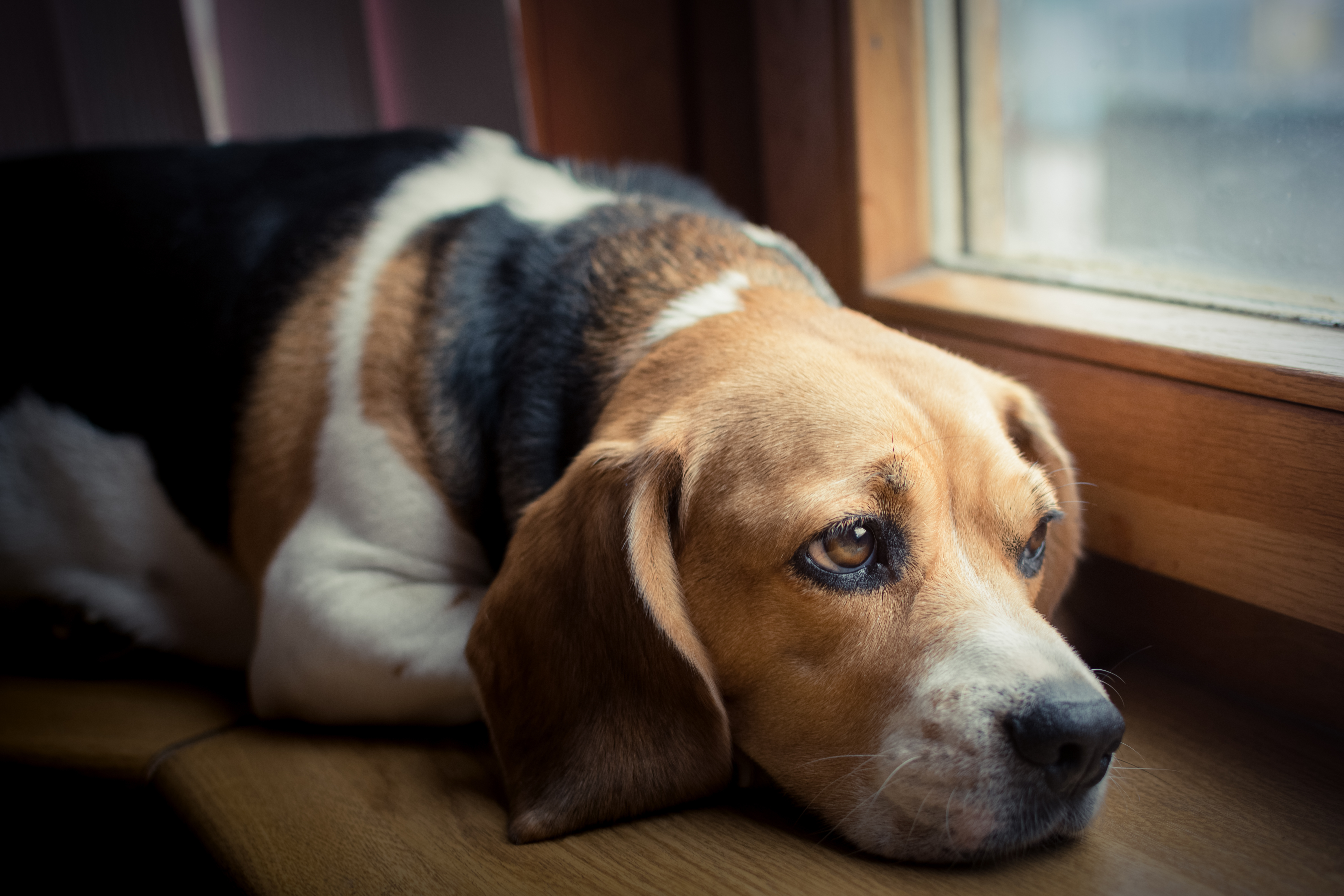 Is your Pet Suffering in Silence? – Part One